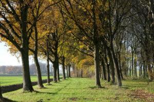 Wonen in Zoetermeer - Natuur - Weidse Weelde Zoetermeer
